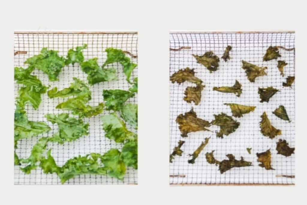 before and after picture: torn pieces of kale to the left; kale chips to the right